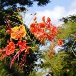 fleurs-chatoyantes-402946