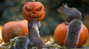 Pumpkin Head Squirrel